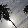 strong sun beats clouds behind a palmtree